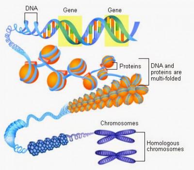 gen dan kromosom